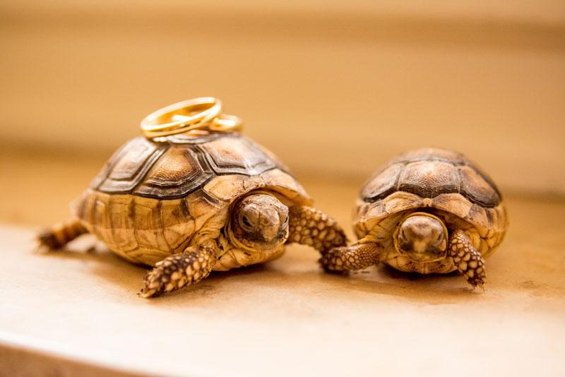 Fotografi matrimoni Roma
